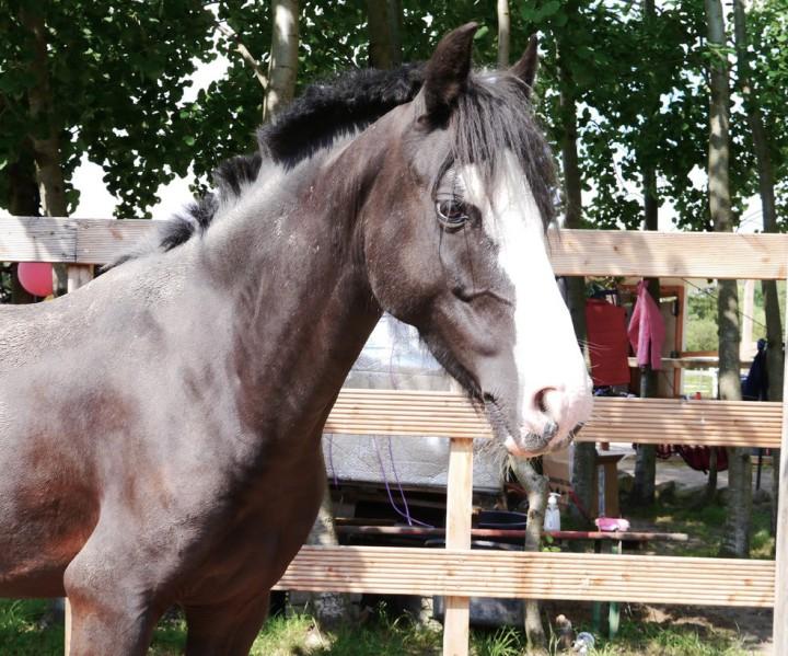 Das sportliche Pony Nuk